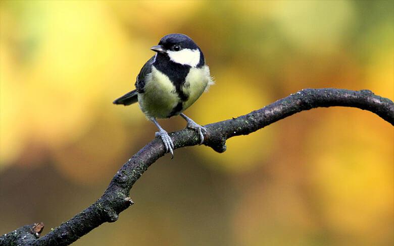 Come attirare molti uccelli nel proprio giardino