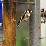 Costruire una mangiatoia per uccelli - Foto: Maurizio Bonora